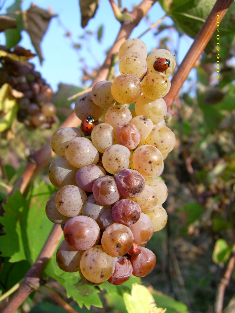 Domaine Sainte Catherine la vigne